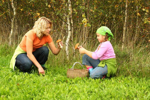 ramasser des champignons