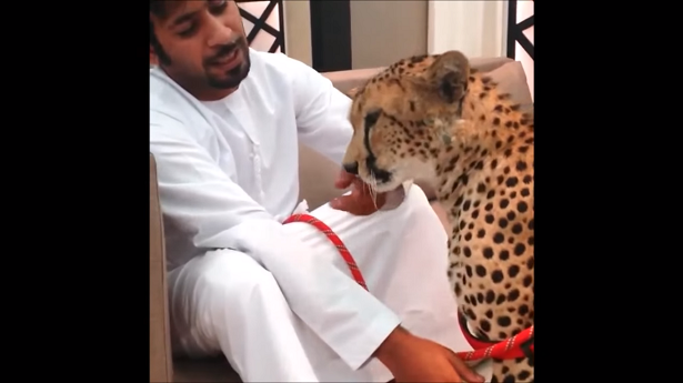 Émirats arabes unis, animaux sauvages