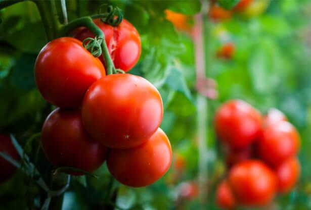panier de légumes septembre, amap septembre