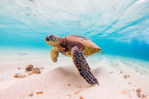 tortues de mer