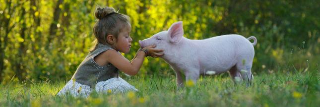 EDITO - Vegans vs. non vegans : un avenir sans aucun élevage est-il souhaitable ?