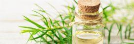 Arbre à thé: 6 manières d'utiliser l'huile essentielle au quotidien