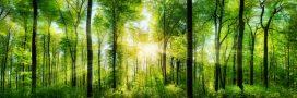 forêt, labels PEFC FSC