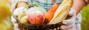 Cuisinez les fruits et légumes de saison en octobre : le panier AMAP