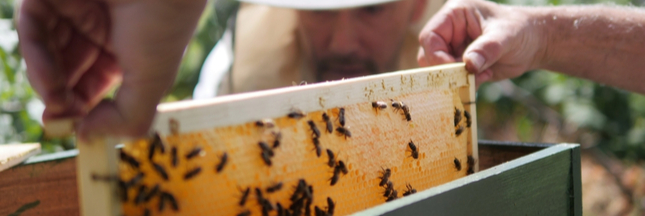 Quand des ruchers solidaires font revivre les abeilles et les hommes