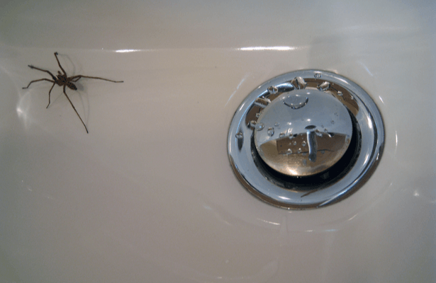 Une araignée dans un lavabo