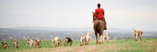La chasse à courre, une pratique d'un autre temps ?