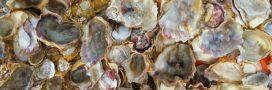 Coquilles de moules et d'huîtres: leurs mille et une vies