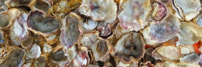 Coquilles de moules et d'huîtres : leurs mille et une vies