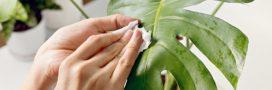 Pour des plantes vertes en bonne santé, pensez à les dépoussiérer!