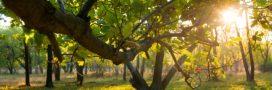 La forêt française sous-exploitée, les feuillus en danger