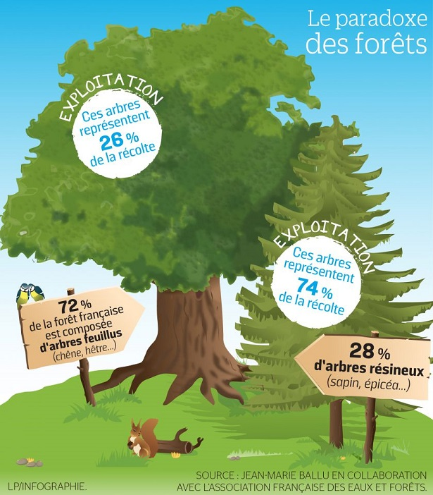 foret francaise