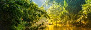 Les forêts tropicales sont elles-mêmes devenues source de CO2