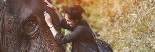 Ganesha Park : écovolontariat et éléphanthérapie en Thaïlande