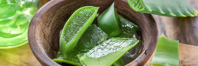 Pourquoi et comment faire une cure de jus d'aloe vera ?