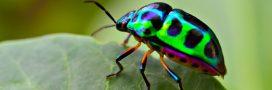 L'hécatombe des insectes: les 3/4 ont disparu en trente ans