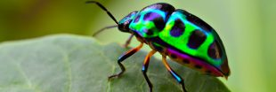 L'hécatombe des insectes : les 3/4 ont disparu en trente ans