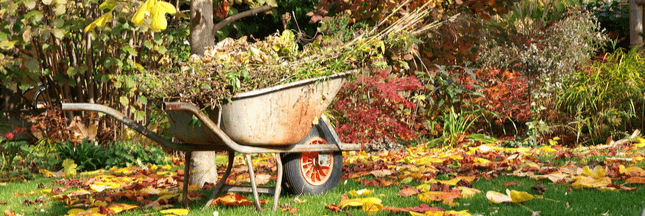 L'automne, la saison idéale pour un jardin prospère