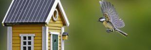 Nourrir les oiseaux en hiver, une bonne ou une mauvaise idée ?