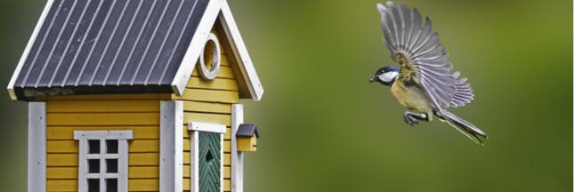 Nourrir les oiseaux en hiver, une bonne ou une mauvaise idée?