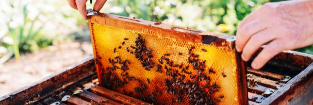 Néonicotinoïdes : la plupart des miels serait contaminés par des pesticides persistants