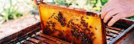 Toxicité des néonicotinoïdes: 75% des miels seraient contaminés