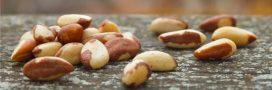 Les noix du Brésil victimes du climat et de leur succès