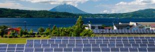 Au Japon, on fait pousser des champignons sous les panneaux solaires