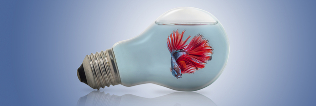 La pêche électrique sera-t-elle bientôt autorisée ?
