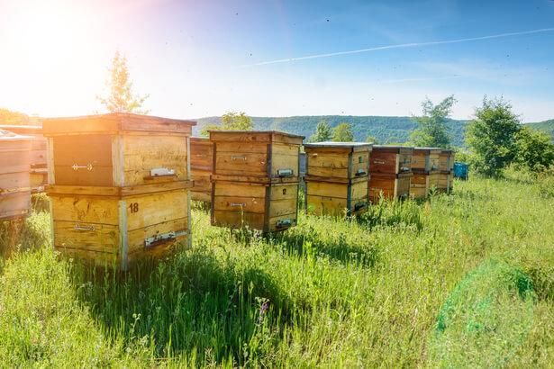 miel contaminé
