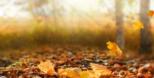 activité feuille d'automne