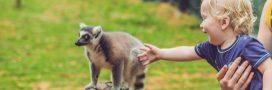 Visite au zoo: les bons comportements à adopter