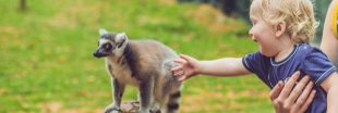 Visite au zoo : les bons comportements à adopter