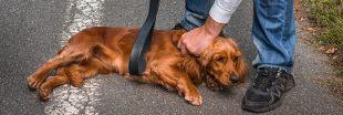 Sondage : Faut-il montrer la maltraitance animale pour la dénoncer ?