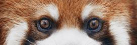 Sélection livre: 'Endangered', portraits d'animaux en voie d'extinction