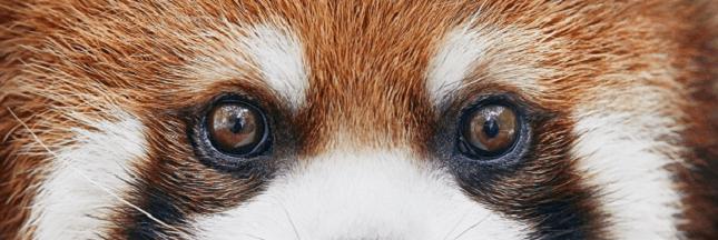 Sélection livre : 'Endangered', portraits d'animaux en voie d'extinction