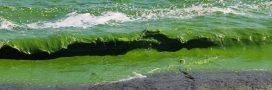 Pollution aux nitrates: une bombe à retardement dans nos sols