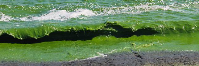 Pollution aux nitrates : une bombe à retardement dans nos sols