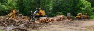 Essayez de sauver une forêt, elle sera quand même vendue pour être abattue
