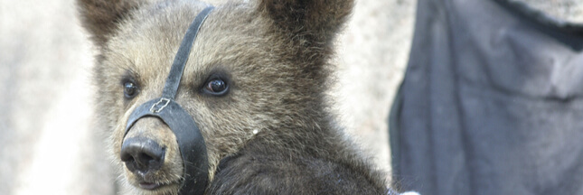 La SPA lance une procédure judiciaire contre les maltraitances animales