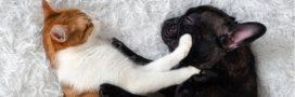 Chats et chiens de race: les importations en hausse en France