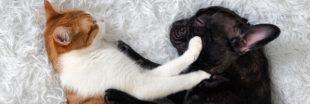 Chats et chiens de race : les importations en hausse en France