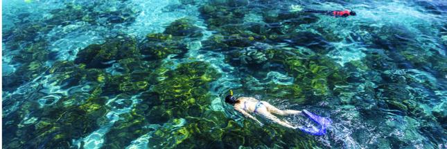 Des transplantations pour sauver la grande barrière de corail en Australie