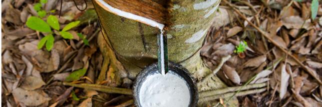 Le caoutchouc naturel, une ressource durable ?