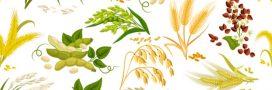 Sélection livre: la santé au naturel avec Hildegarde de Bingen