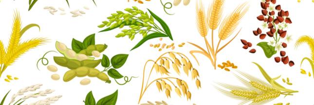 Sélection livre : la santé au naturel avec Hildegarde de Bingen