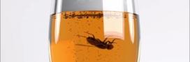 Le saviez-vous: lorsqu'une mouche tombe dans un verre, mieux vaut que ce soit un mâle!