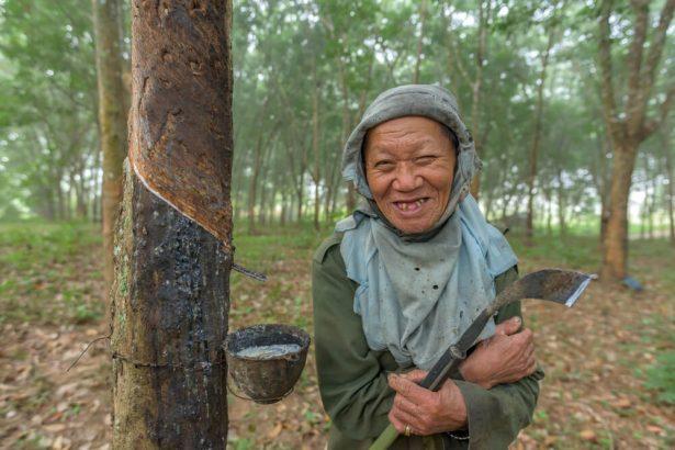 caoutchouc naturel, plantation d'hévéa