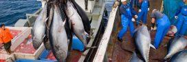 Pêche et quotas de poissons: ça tangue au niveau international