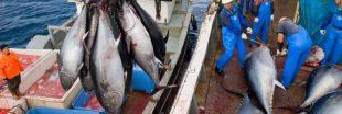 Pêche et quotas de poissons : ça tangue au niveau international